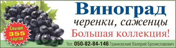 Гранковский-виноград