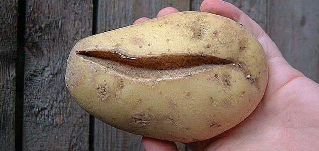 картошка треснутая