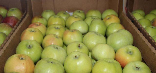 храним яблоки