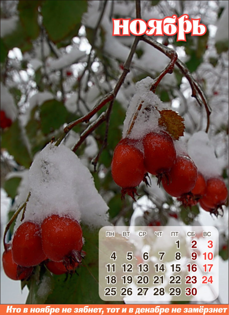 Лунный календарь — НОЯБРЬ 2019